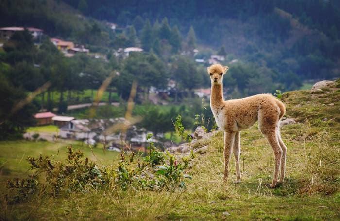 voyage perou1 Partir à la découverte des trésors naturels lors d'un voyage au Pérou